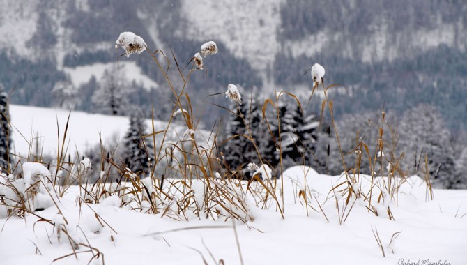 Winterlandschaft Goldegg